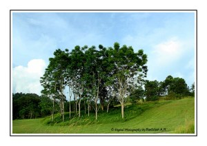 Trees and Sky at Raub Golf Course