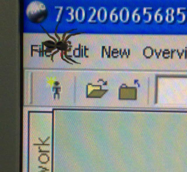 Spideer at Computer screen