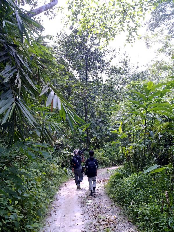 Kemensah Forest Trail
