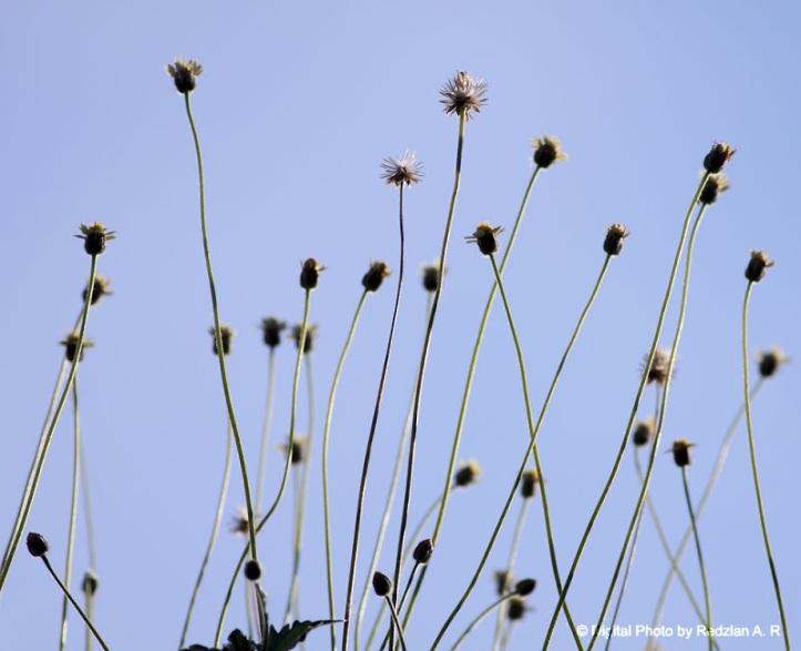 Button Coat flowers