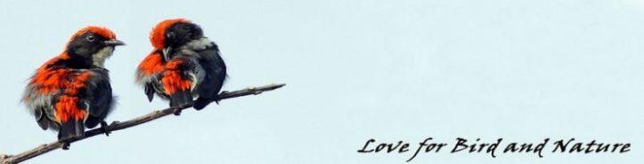 cropped-headerlovebird1048-1-3.jpg
